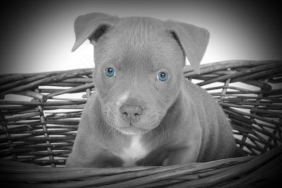 dog photography 2