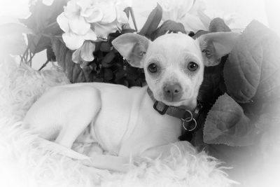 dog photography 3