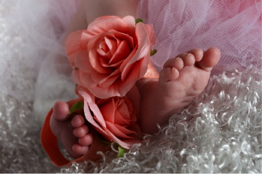 professional photograph of newborn baby's feet and flowers by Andrea Michaels portrait studios